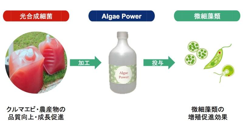 光合成細菌由来の藻類活性化剤の製造・販売